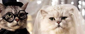 cat-wedding